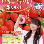 pamphlet_2017_strawberry_heads